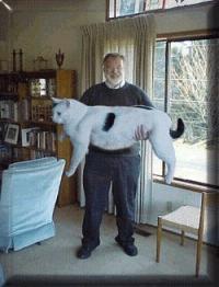 Haben Katzen Einen Bauchnabel